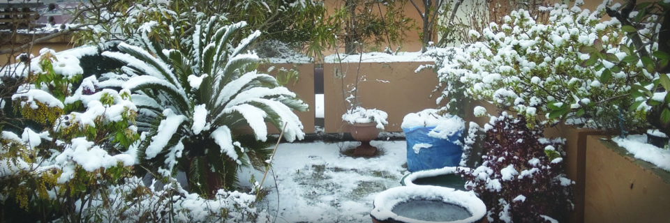 Et si il finissait par faire froid ? Protéger vos plantes et arrosage !